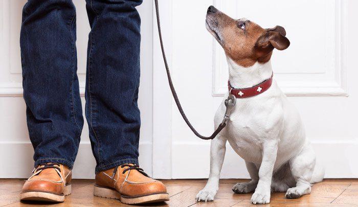 آیا نگهداری سگ در آپارتمان منع قانونی دارد؟